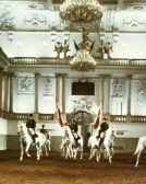 5-29-2012-school-quadrille-in-the-hall-built-by-fischer-von-erlach